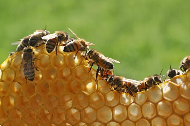 巣をつくる蜂たち