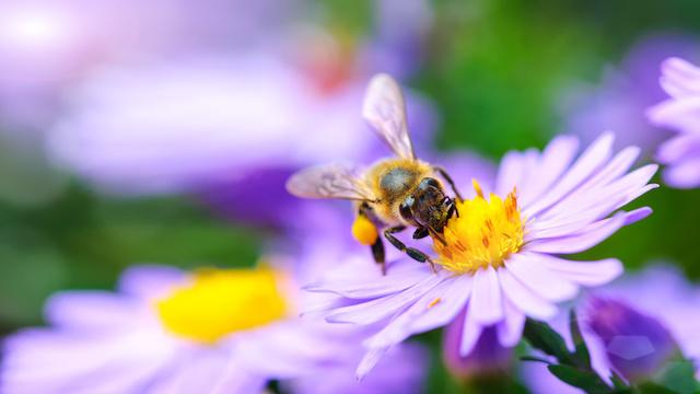 花にとまる蜂